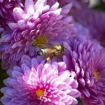 Weetjes over bloemen