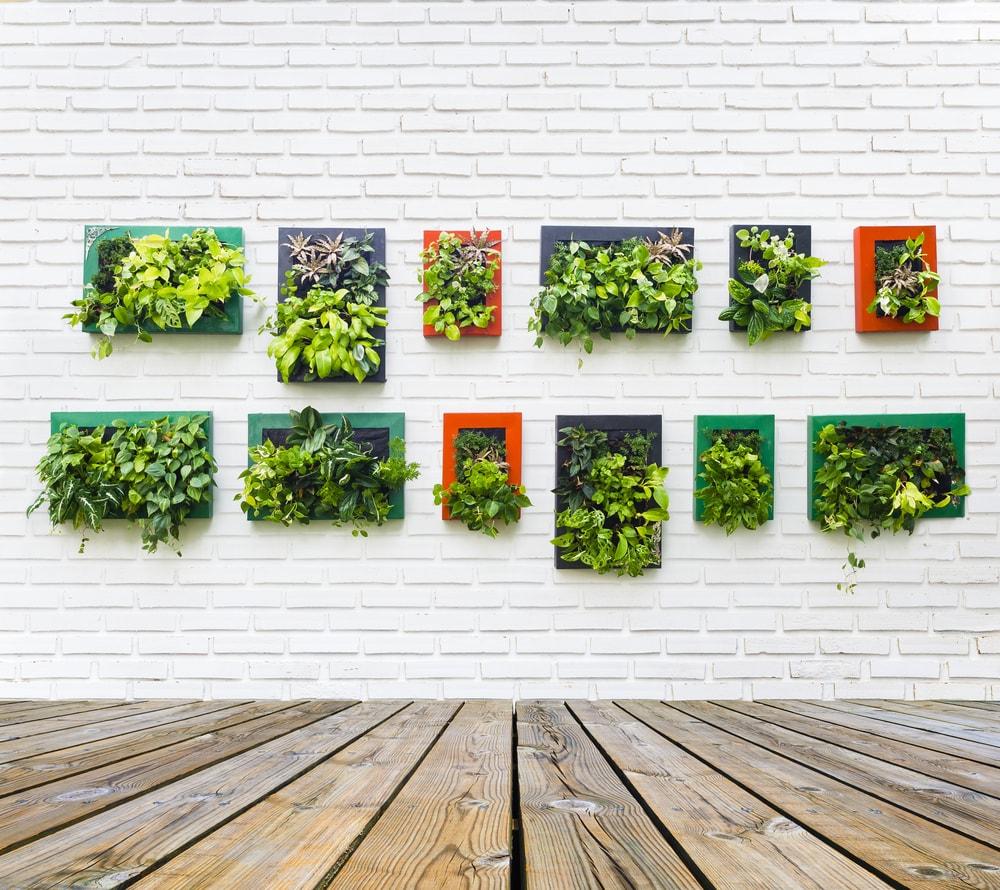 juiste planten onderhoudvrij