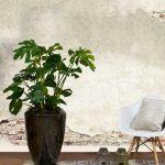 gatenplant online kopen