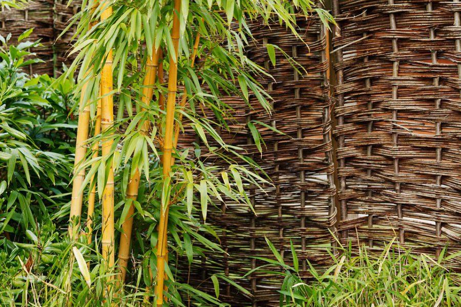 Waar komt het woord 'bamboe' precies vandaan
