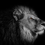 Unieke eigenschappen van het sterrenbeeld Leeuw