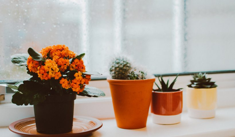 Weetjes over bloempotten die jij nog niet wist