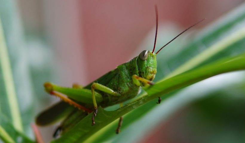 Omgaan met insecten en ongedierte rond de woning